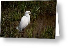 The Great White Heron Greeting Card