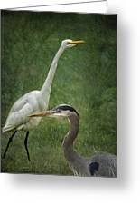 The Greats - Birds That Is... Greeting Card
