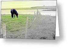 The Long Green Fields Back Home  Greeting Card