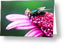 The Green Fly Greeting Card