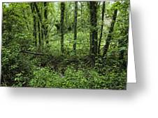 The Green Forest Greeting Card