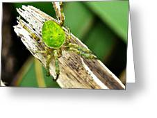 The Green Spider Greeting Card
