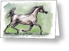 The Grey Arabian Horse 8 Greeting Card