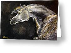 The Grey Arabian Horse 9 Greeting Card