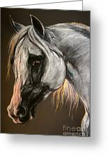 The Grey Arabian Horse Greeting Card