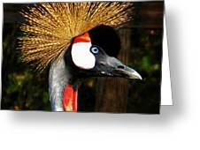 The Grey Crowned Crane Greeting Card