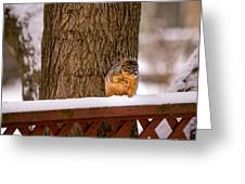 The Grey Squirrel George In Winter Greeting Card