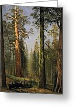 The Grizzly Giant Sequoia Mariposa Grove California Greeting Card