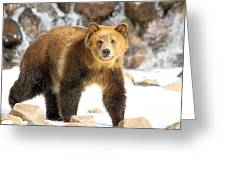 The Grizzly Strut Greeting Card
