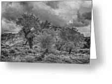 The Grouped Cottonwoods  Greeting Card