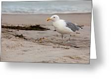 The Gull Greeting Card