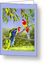 The Happy Couple - Eastern Rosellas  Greeting Card