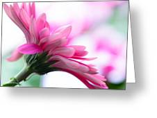 The Happy Flower Pink Daisy Greeting Card