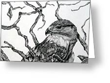 The Hawk Greeting Card