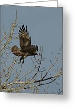 The Hawk Greeting Card
