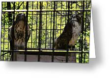 The Hawks From The Series The Imprint Of Man In Nature Greeting Card