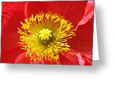 The Heart Of A Red Poppy Greeting Card