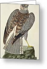 Hen Harrier Greeting Card