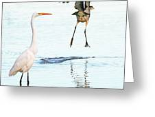 The Heron With The Bird Face Butt. Greeting Card