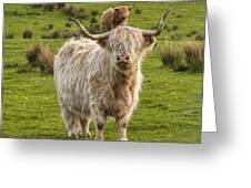 The Highland Dude Greeting Card
