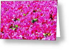 The Honey Bee Greeting Card