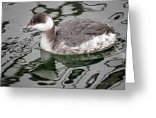 The Horned Grebe Greeting Card