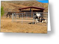 The Horse Ranch 3 Greeting Card