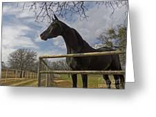 The Horse Trainer Greeting Card