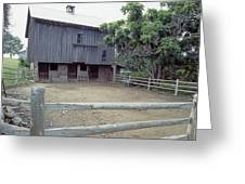 The Horses Are Out Of The Barn Greeting Card