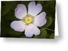 The Humble Dog Rose Greeting Card