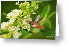 The Hummer And The Butterfly Bush Greeting Card