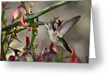 The Hummingbird And The Slipper Plant  Greeting Card