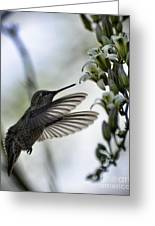 The Hummingbird  Greeting Card