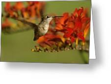 The Hummingbird Turns   Greeting Card