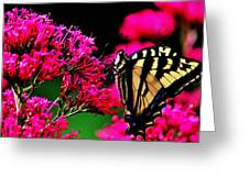 The Hungry Butterfly Greeting Card