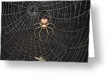 The Hunter And Its Pray - A Gold Fly Caught By A Gold Spider Greeting Card
