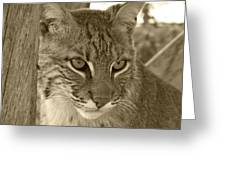 The Hunter - Sepia Greeting Card