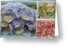 The Hydrangeas Of Late Spring Greeting Card