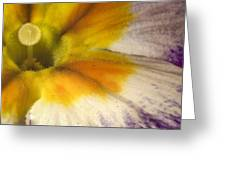The Inner Circle Of A Primrose Greeting Card
