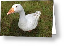 The Inquisitive Goose Greeting Card