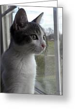 The Inquisitive Kitty Jackson Greeting Card