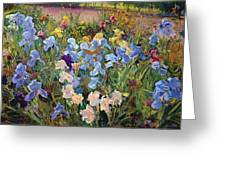 The Iris Bed Greeting Card