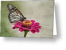 The Joy Of A Butterfly Greeting Card
