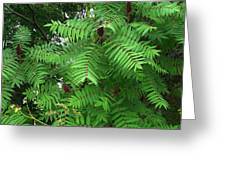 The Jutting Sumac Canopy Hungers For Light Greeting Card