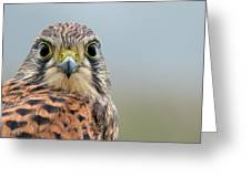 The Kestrel Face To Face Greeting Card