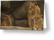 The King And His Queens Greeting Card