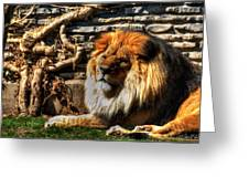The King Lazy Boy At The Buffalo Zoo Greeting Card