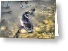 The King Of The Pond Greeting Card