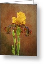 The Kings Prize Iris Greeting Card