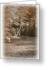The Labradoodle On The Go Greeting Card